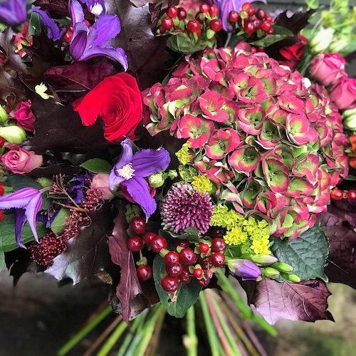 BBF OMG hydrangea autumnal